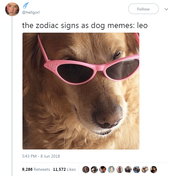 Dog Memes as Zodiac Signs - Dog as Leo wearing sunglasses and giving a mysterious look