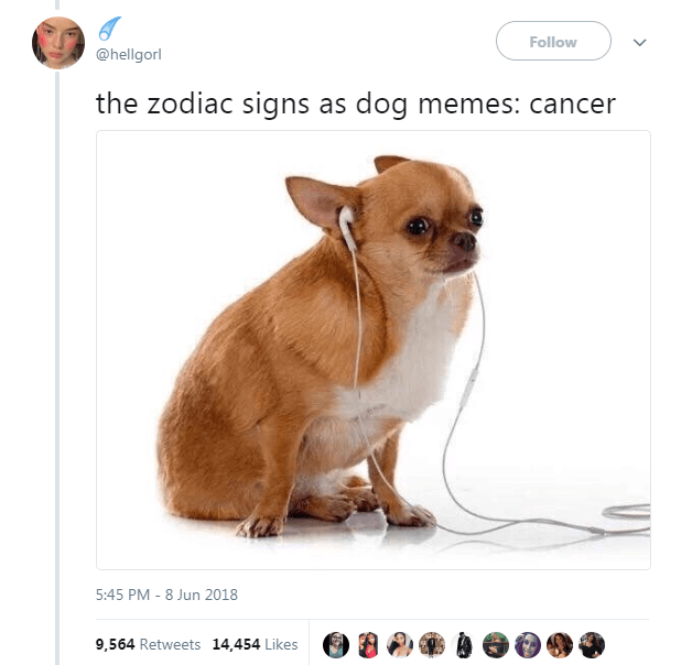 Dog Memes as Zodiac Signs - Dog as Cancer and wearing headphones