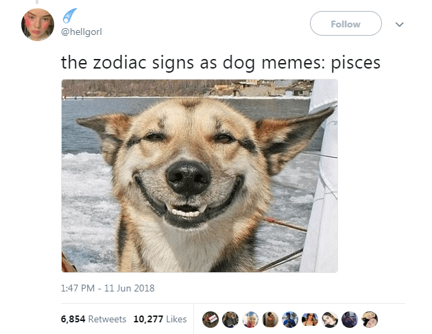 Dog Memes as Zodiac Signs - Dog as Pisces smiling at the camera