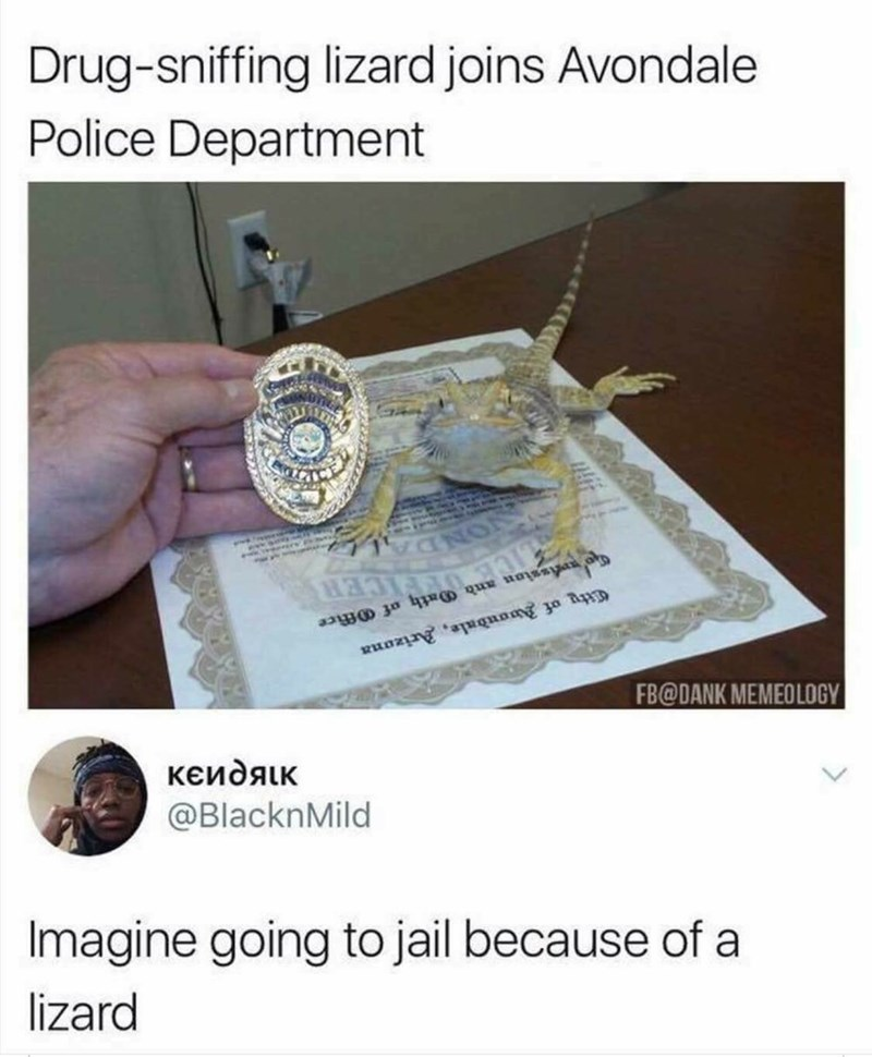 Text - Drug-sniffing lizard joins Avondale Police Department Cety of Auandale, Arizana FB@DANK MEMEOLOGY ксидяк @BlacknMild Imagine going to jail because of a lizard