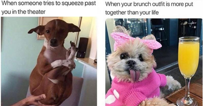 funny dog memes doggo