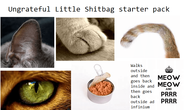 Bratty cat starter pack meme