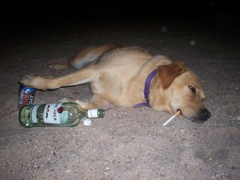 cursed_image - dog with cigarette in mouth and bottle of alcohol