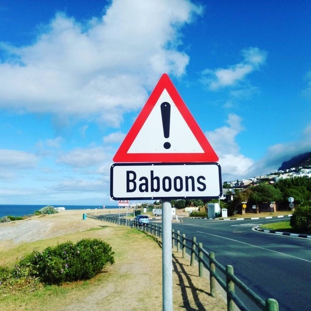 Sky - Baboons