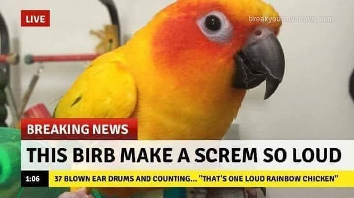 "Bird - breakyourownnews.com LIVE BREAKING NEWS THIS BIRB MAKE A SCREM SO LOUD 37 BLOWN EAR DRUMS AND COUNTING...""THAT'S ONE LOUD RAINBOW CHICKEN"" 1:06"