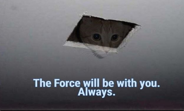 "Original Ceiling Cat saying, ""The Force will be with you. Always"""