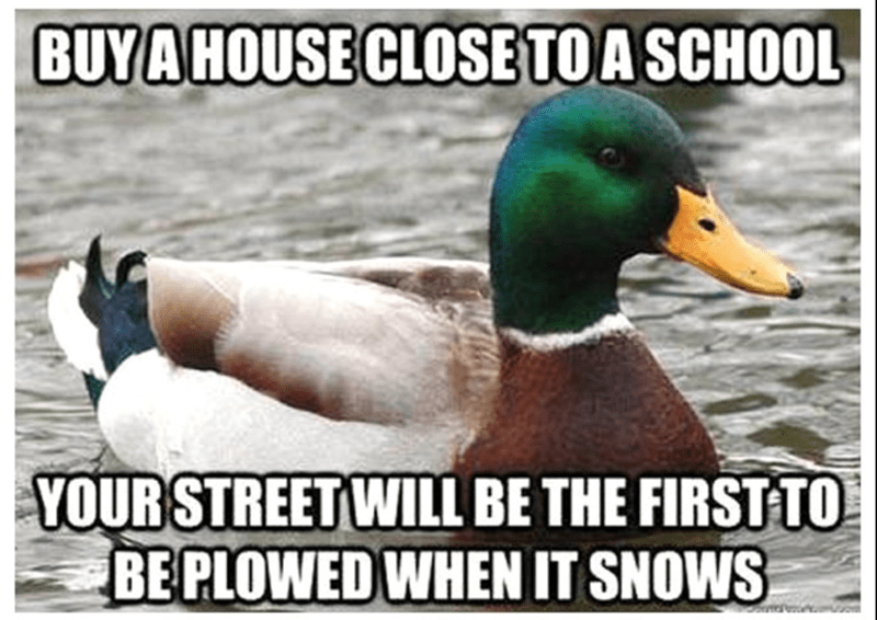 Bird - BUY A HOUSE CLOSE TO A SCHOOL YOUR STREET WILL BE THE FIRST TO BE PLOWED WHEN IT SNOWS