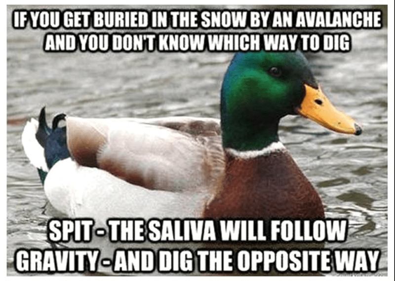 Bird - IFYOU GET BURIED IN THE SNOW BY AN AVALANCHE AND YOU DONT KNOW WHICH WAY TO DIG SPIT THESALIVA WILL FOLLOW GRAVITY AND DIGTHE OPPOSITE WAY