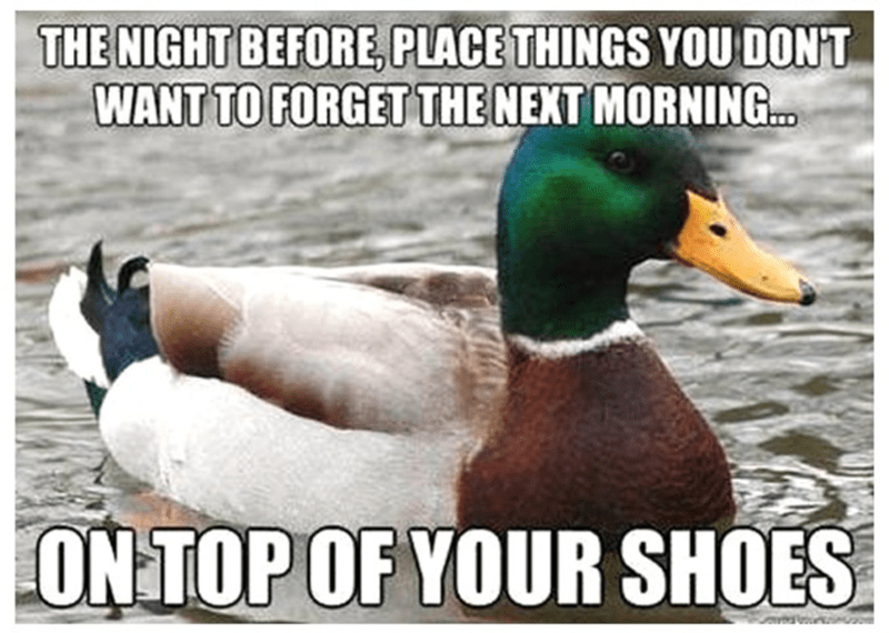 Bird - THE NIGHT BEFORE, PLACE THINGS YOU DON'T WANT TO FORGET THENEXT MORNING... ON TOP OF YOUR SHOES