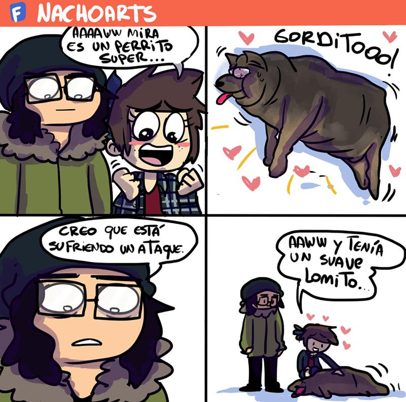 cuando encuentras un perro muerto