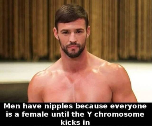 Barechested - Men have nipples because everyone is a female until the Y chromoso me kicks in