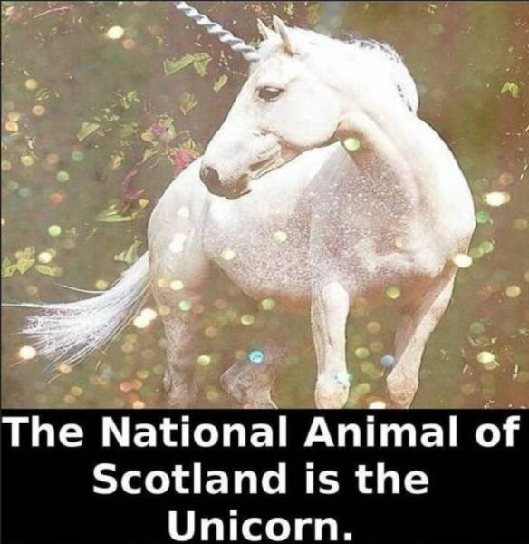 Horse - The National Animal of Scotland is the Unicorn.