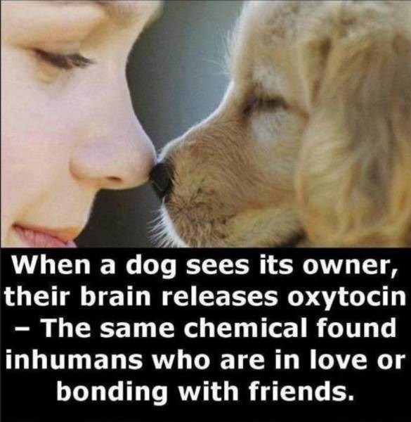 Face - When a dog sees its owner, their brain releases oxytocin - The same chemical found inhumans who are in love or bonding with friends.