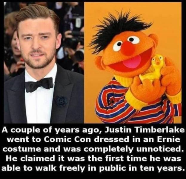 Animated cartoon - A couple of years ago, Justin Timberlake went to Comic Con dressed in an Ernie costume and was completely unnoticed. He claimed it was the first time he was able to walk freely in public in ten years.