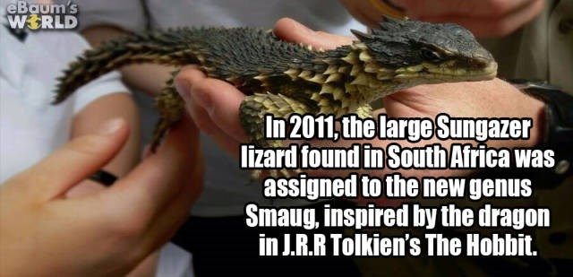 Reptile - eBaum's WERLD In 2011,the large Sungazer lizard found in South Africa wa assigned to the new genus Smaug, inspired by the dragon in J.R.R Tolkien's The Hobbit.