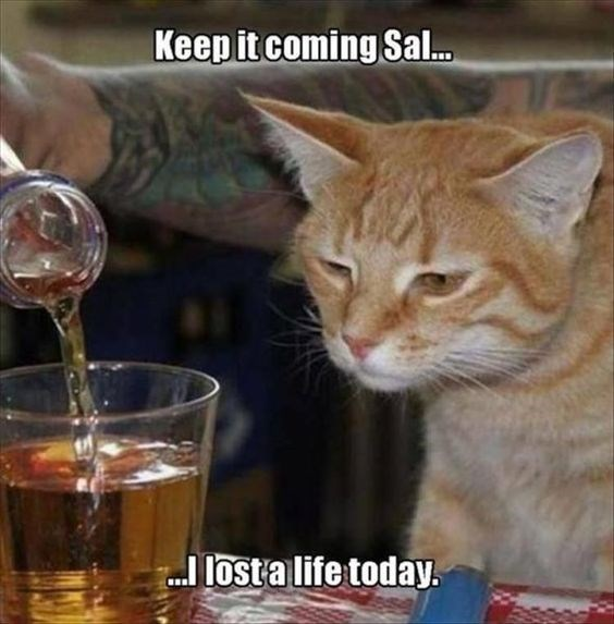 Caturday meme about drinking on the weekends
