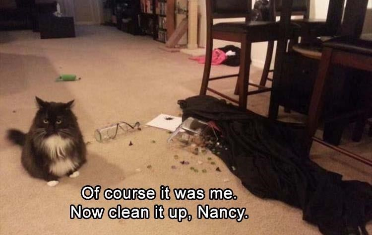 Caturday meme with a cat not being ashamed of the mess it made
