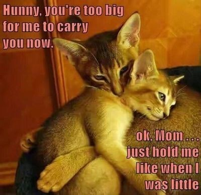 Caturday meme with kitten cuddling with its mother