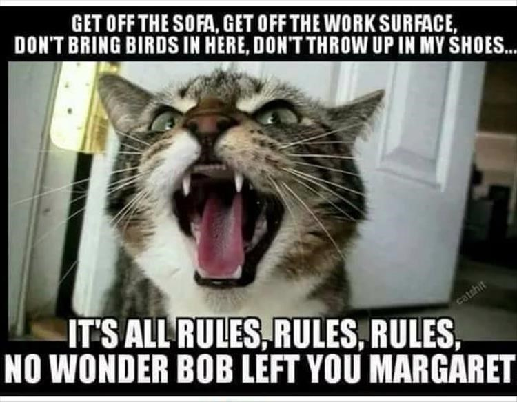 caturday meme about cats not liking all the rules
