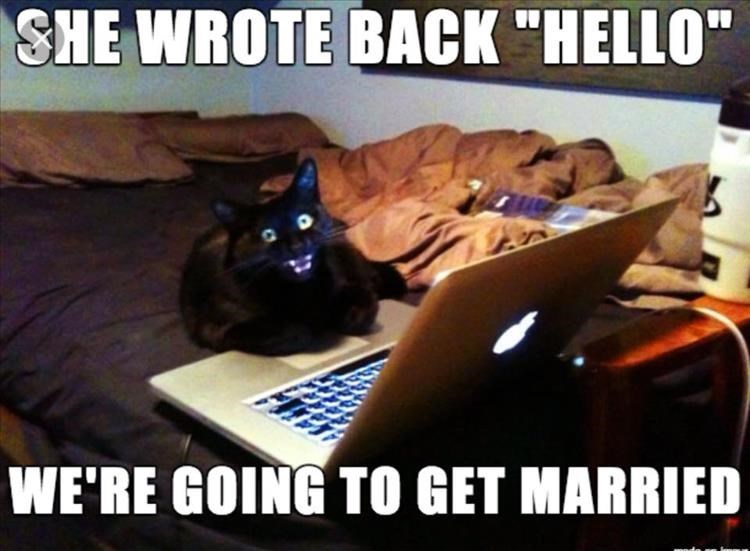 Caturday meme about online dating with pic of a cat sitting excitedly on a laptop