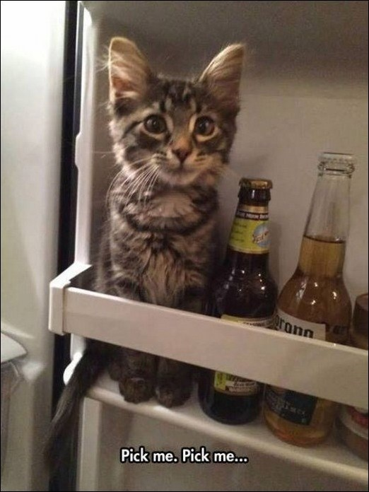 Caturday meme with pic of a kitten sitting in a fridge next to some bottles