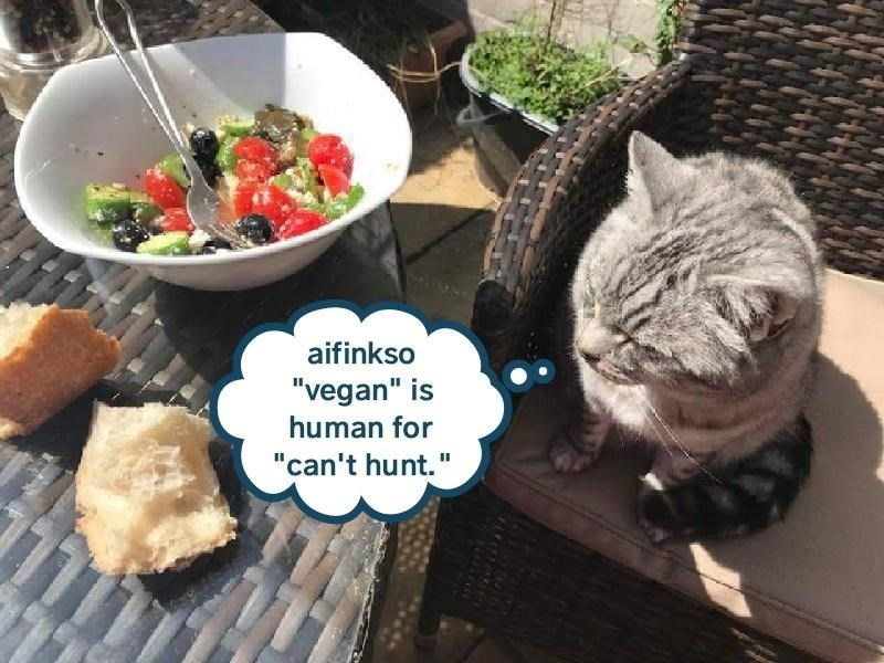 "Cat - aifinkso ""vegan"" is human for ""can't hunt."""