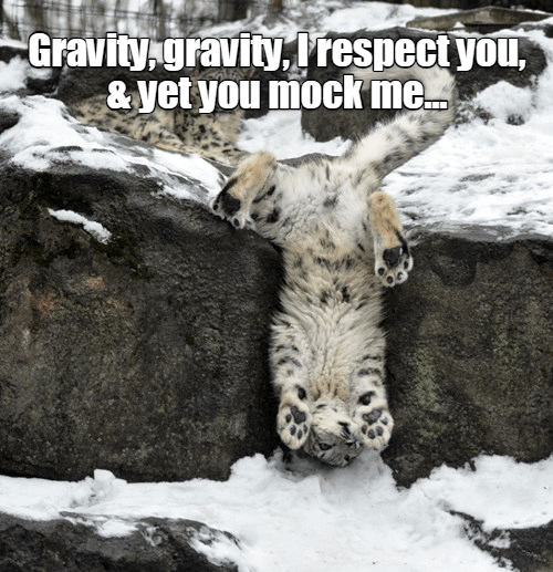 Snow leopard - Gravity gravity, respect you, &yet you mock me.