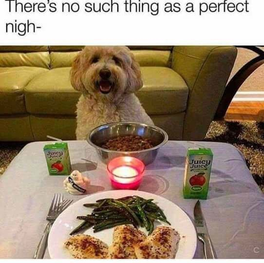 Dog - There's no such thing as a perfect nigh- Juncy Junce Juicy Jutce