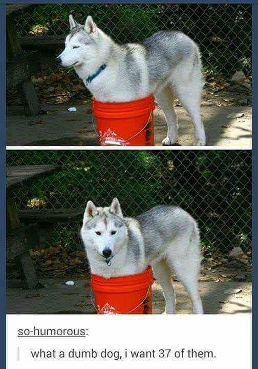 Mammal - so-humorous: what a dumb dog, i want 37 of them.