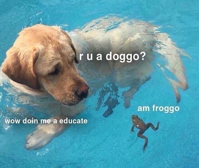 Vertebrate - rua doggo? am froggo WOW doin me a educate Moyor