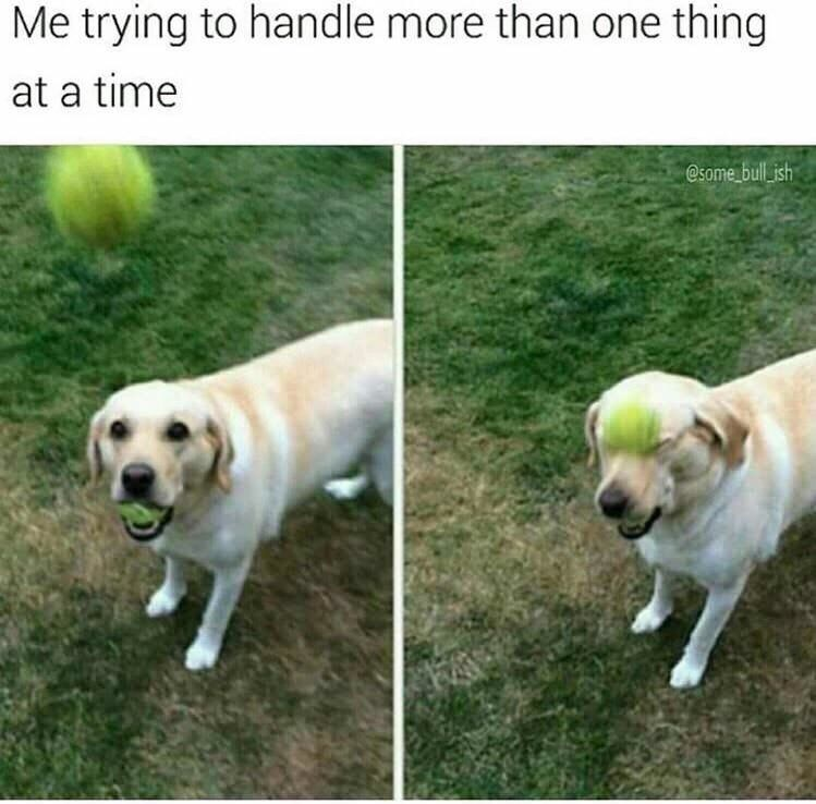 Dog - Me trying to handle more than one thing at a time Some bull ish