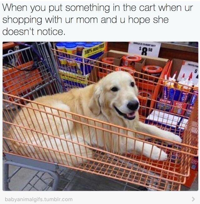 Golden retriever - When you put something in the cart when shopping with ur mom and u hope she doesn't notice. $8.9 100%FREE I P babyanimalgifs.tumblr.com