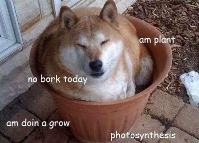 Mammal - plant am no bork today am doin a grow photosynthesis