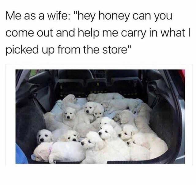 "Puppy - Me as a wife: ""hey honey can you come out and help me carry in what I picked up from the store"""
