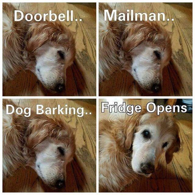 Hair - Mailman.. Doorbell.. Dog Barking.. Fridge Opens