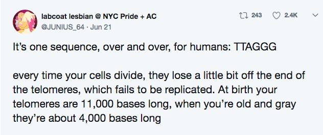 crazy lobster fact - Text - t 243 2.4K labcoat lesbian @ NYC Pride AC @JUNIUS_64 Jun 21 It's one sequence, over and over, for humans: TTAGGG every time your cells divide, they lose a little bit off the end of the telomeres, which fails to be replicated. At birth your telomeres are 11,000 bases long, when you're old and gray they're about 4,000 bases long