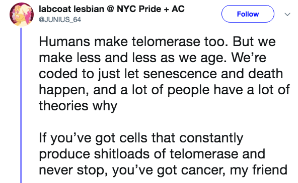 crazy lobster fact - Text - NYC Pride + AC labcoat lesbian Follow @JUNIUS 64 Humans make telomerase too. But we make less and less as we age. We're coded to just let senescence and death happen, and a lot of people have a lot of theories why If you've got cells that constantly produce shitloads of telomerase and never stop, you've got cancer, my friend