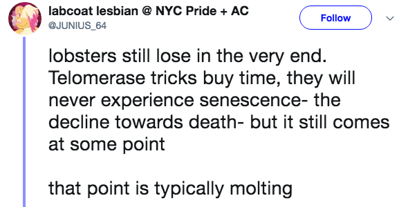 crazy lobster fact - Text - labcoat lesbian @ NYC Pride AC Follow @JUNIUS 64 lobsters still lose in the very end. Telomerase tricks buy time, they will never experience senescence- the decline towards death- but it still comes at some point that point is typically molting