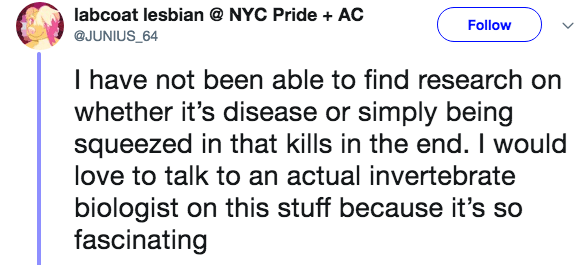 crazy lobster fact - Text - labcoat lesbian NYC Pride + AC Follow @JUNIUS_64 I have not been able to find research on whether it's disease or simply being squeezed in that kills in the end. I would love to talk to an actual invertebrate biologist on this stuff because it's so fascinating