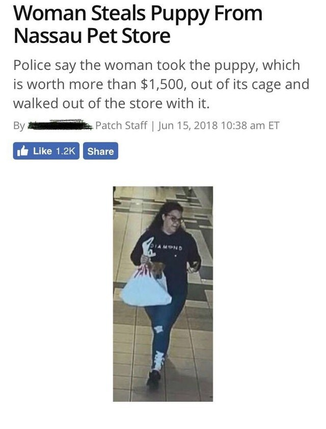 Text - Woman Steals Puppy From Nassau Pet Store Police say the woman took the puppy, which is worth more than $1,500, out of its cage and walked out of the store with it. Patch Staff | Jun 15, 2018 10:38 am ET Вy Like 1.2K Share DIAMOND