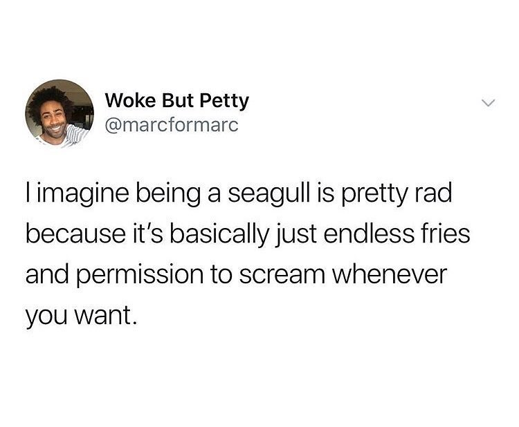 Funny meme about about how being a seagull would be the dream.