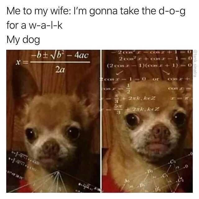 Funny meme about walking the dog and spelling the words out