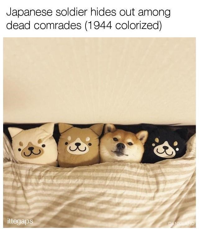 Canidae - Japanese soldier hides out among dead comrades (1944 colorized) ittegaps PANCLAND