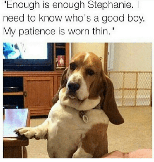 """Meme of a basset hound saying, """"Enough is enough Stephanie. I need to know who's a good boy. My patience is worn thin"""""""