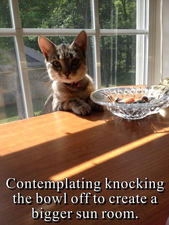 Contemplating knocking the bowl off to create a bigger sun room. | cute cat standing next to a glass bowl on a table