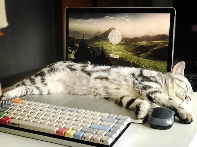 Cat - paswond nceed NE- CHERRY Pt Ctr