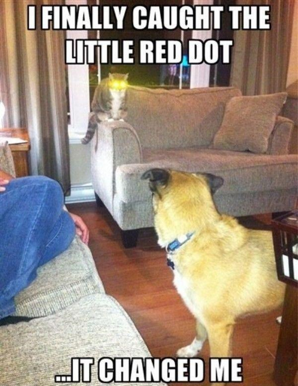 Internet meme - OFINALLY CAUGHT THE LITTLE RED DOT IT CHANGED ME