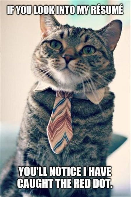 Cat - IFYOU LOOKINTOMYRESUME YOU'LL NOTICE I HAVE CAUGHT THE RED DOT