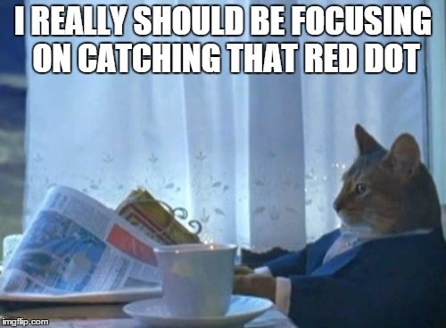 Photo caption - IREALLY SHOULD BE FOCUSING ON CATCHING THAT RED DOT imgflip.com