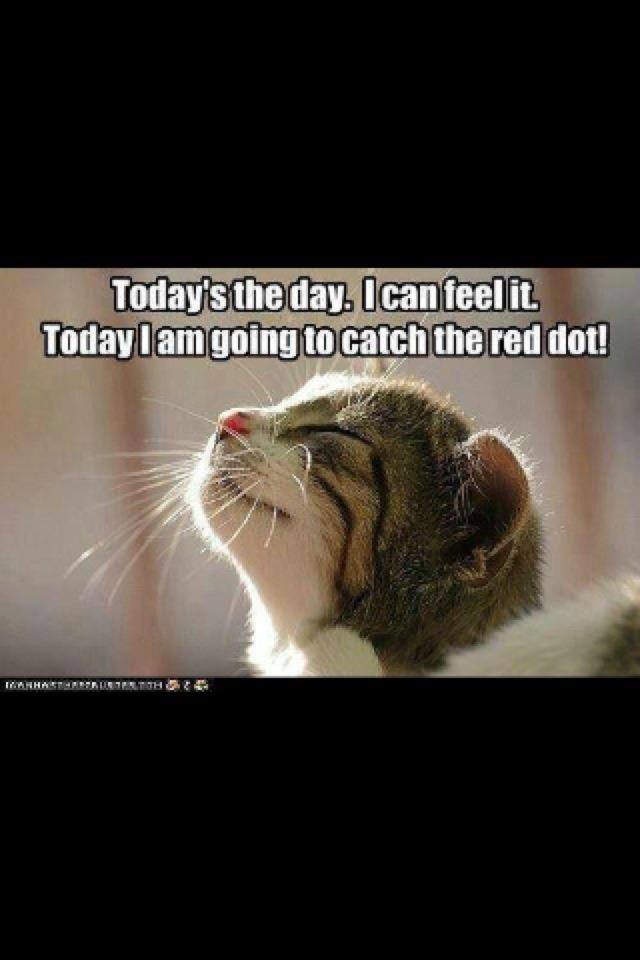 Cat - Today's the day, Ican teel it Todaylamgoing to catch the red dot! HA UN TTH